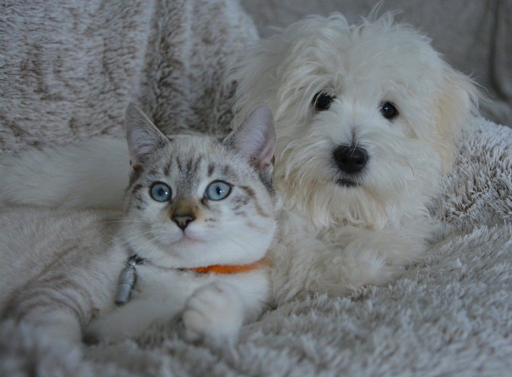 chien et chat heure o veto euradio