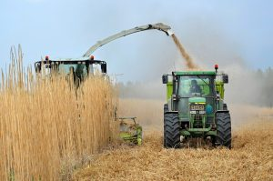 biomass - smart for climate
